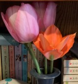 tulips2020